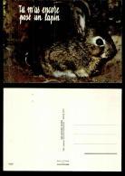 741-animaux-3597     Lapin - Ansichtskarten