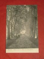 WEMMEL  -  Drève Du Parc Du Château De Limburg - Stirum       -  (2 Scans) - Wemmel