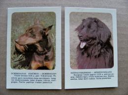 2 small calendar from Lithuania 2006 animal dog chien newfoundland dobermann