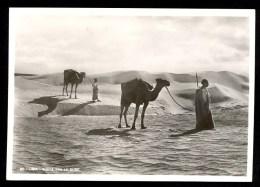 20 Libia. Sosta Tra Le Dune - Vera Fotografia ------- Postcard Not Traveled - Libye