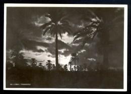60. Libia. Tramonto  - Vera Fotografia ------- Postcard Not Traveled - Libye