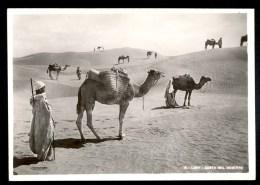 16. Libia. Sosta Nel Deserto  - Vera Fotografia ------- Postcard Not Traveled - Libye