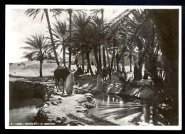 6. Libia. Sorgente Di Sinauen - Vera Fotografia ------- Postcard Not Traveled - Libye
