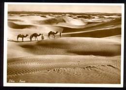 Libia. Dune - Vera Fotografia ------- Postcard Not Traveled - Libye