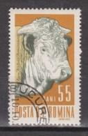 Roemenie, Romina, Romania Used ; Koe, Cow , La Vache, Vaca, Bull, Stier - Koeien