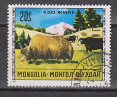 Mongolie, Mongolia Used ; Koe, Cow , La Vache, Vaca, Bull, Stier, Yak - Koeien