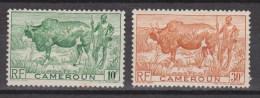 Cameroen, Cameroun MLH ; Koe, Cow , La Vache, Vaca - Koeien