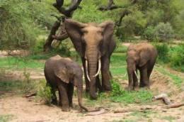 Postal Stationery Stamped C-d26-21- Elephant - Elephants