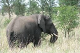 Postal Stationery Stamped C-d26-21- Elephant 3 - Elephants