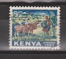 Kenya, Kenia Used ; Buffel, Buffelo, Buffle, Bufalo - Koeien