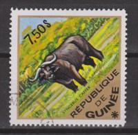Guinee Guinea Used ; Buffel, Buffelo, Buffle, Bufalo - Koeien