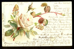 Rose - Lith.-artis Anstalt Muncher Series XXIII No. 171469  ------- Old Postcard Traveled - Fleurs, Plantes & Arbres