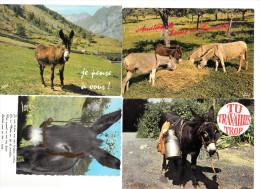 4 Cartes Postales D'ANES  N°2 - Burros