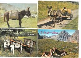 4 Cartes Postales D´ANES  N°3 - Burros