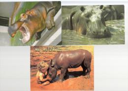 3 Cartes Postales De HIPPOPOTAMES - Flusspferde