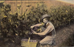 Grapes - One Of Canada's Famous Fruits - Fleurs, Plantes & Arbres