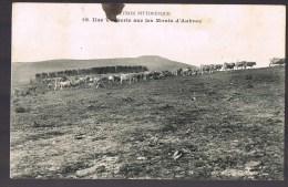 Une Vacherie Sur Les Monts D'Aubrac . - Francia