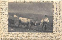 [DC5758] CARTOLINA - PASTORE CON MUCCA - Viaggiata 1904 - Old Postcard - Allevamenti