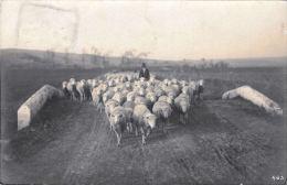 [DC5760] CARTOLINA - FOTOGRAFICA - GREGGE DI PECORE SUL PONTE - Viaggiata 1909 - Old Postcard - Allevamenti