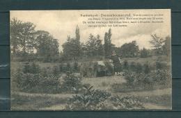 NORDERWYCK: Dennenboomwortel, Niet Gelopen Postkaart (Uitg Heylen) (GA19662) - Herentals
