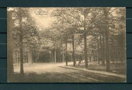 OOSTMALLE: De Heeredreef, Gelopen Postkaart 1924 (Uitg Desaix) (GA19901) - Malle