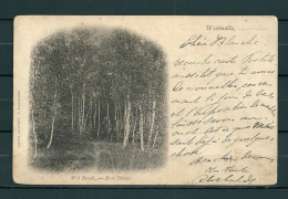 WESTMALLE: Wit Bosch, Gelopen Postkaart 1902(GA20395) - Malle