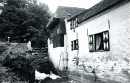 ERPE Bij Erpe-Mere (O.Vl.) - Molen / Moulin - De Cottemmolen In 1981, Vóór De Restauratie. - Erpe-Mere