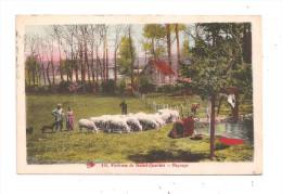 Saint-Junien- Environs- Paysage- Moutons- Laveuse