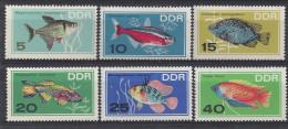 Germany (DDR) 1966  Zierfische  (**)  MNH  M.1221-1226 - [6] República Democrática