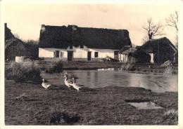 44410] Loire Atlantique ( St SAINT -LYPHARD) BRECA En Grande Brière Vue Par Jacques Cholet ( La Siréne 1420)*PRIX FIXE - Saint-Lyphard