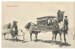 Egypt Mariage Indigène Local Marriage Camels Desert Life  - Undivided Back C. 1904 - Persons