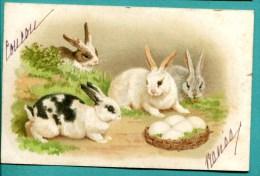 LAPIN -  Devant Un Panier - 2 SCANS - Voyagé 1901 - Carte Précurseur - Animali