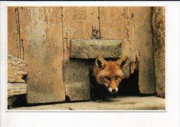 Animal  Sauvage / Renard - Animaux & Faune