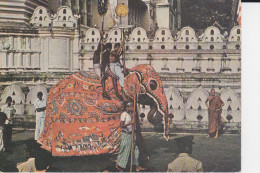 CPSM ELEPHANT REVETU TUNIQUE APPARAT SRI LANKA CEYLAN SPECTACLE KANDY - Éléphants