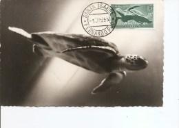 Tortues ( CM De Guinée Espagnole De 1955 à Voir) - Schildkröten