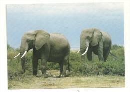 Eléphants - Éléphants