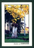 SURINAM  -  Oude Sluis  Used Postcard As Scans - Surinam