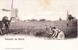 Souvenir De GENCK - La Récolte Des Pommes De Terre - Superbe Carte Animée Avec Moulin à Vent Et Eglise - Genk