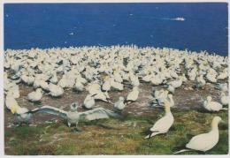 Gaspe-quebec-L'ile Bonavanture-used,perfect Shape-bird-seagull - Gaspé