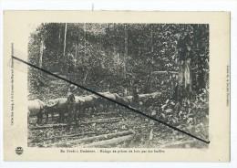 CPA- En Forêt à Godebert- Halage De Pièces De Bois Par Des Buffles - Guyane