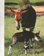 OKAPI - Animals