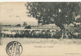Polemidia Near Limasol Used Cairo To Edit M. Caremfilaki  Alexandria 1920 - Chypre