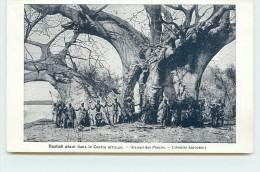 BAOBAB GÉANT DANS LE CENTRE AFRICAIN. - Cartes Postales