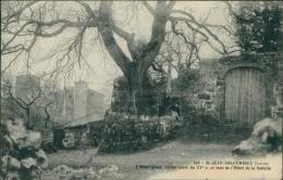 42 SAINT JEAN SOLEYMIEUX / L'Orme Géant Et Tour De L'Hôtel De La Gabelle / - Saint Jean Soleymieux