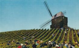 MOULIN HISTORIQUE DE VERZENAY(dil96) - Windmills