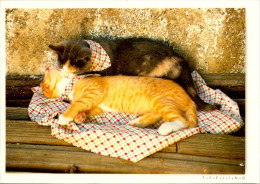 CHAT  / LOT 2 - Katten