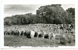 """Australia`s Golden Fleece"", Merino Sheep - Australien"