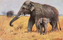 CPA Elephants  Signée - Elephants
