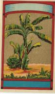 Chromo Etiquette/ Non Personnalisée/Produit D´Hygiéne/Bananier/GB?/ Vers 1890-1900         PARF72 - Etiquettes