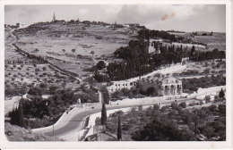 PC Jerusalem - Panorama Of Getsemani - Gethsemane - 1955 (9633) - Israel